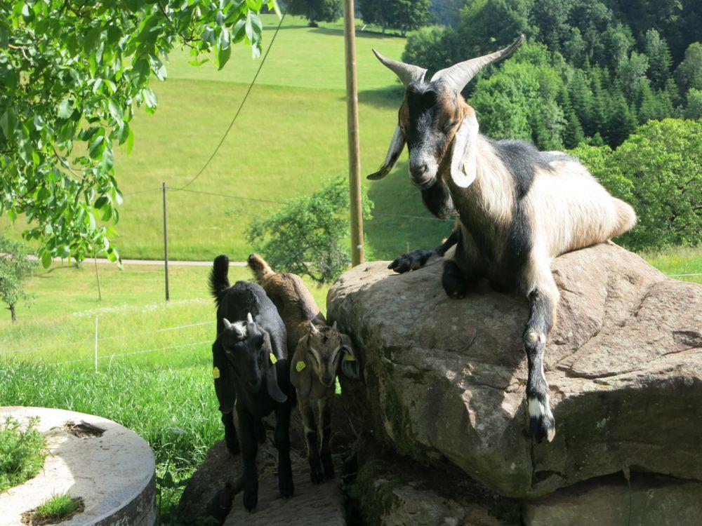 Susi und Lotte mit dem Ziegenbock Peter
