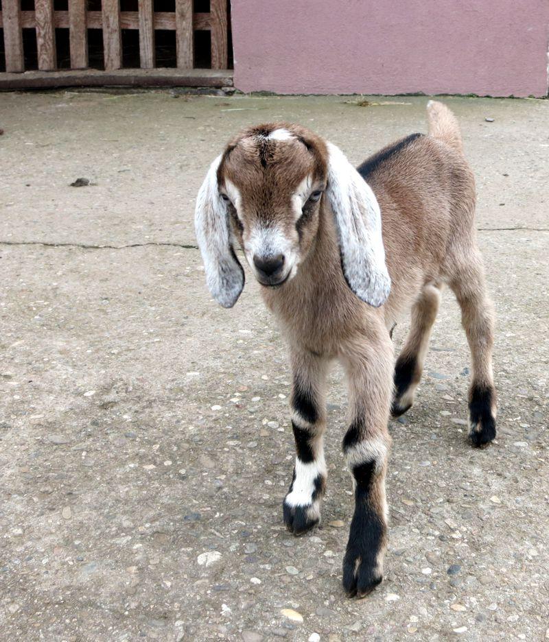 Rosi ist am 9. April 2016 geboren