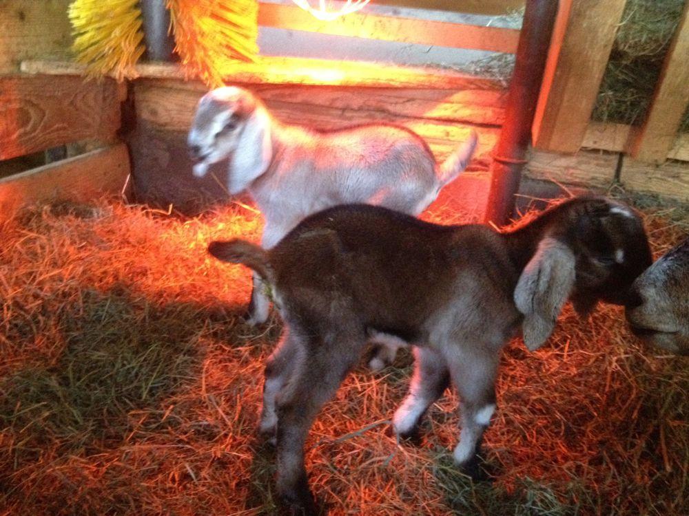 Ronja und Rudolf, geboren am 24.02.2018