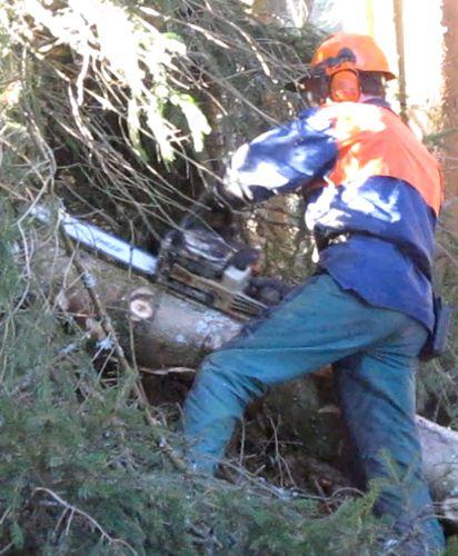 Langholz wird von Ästen befreit